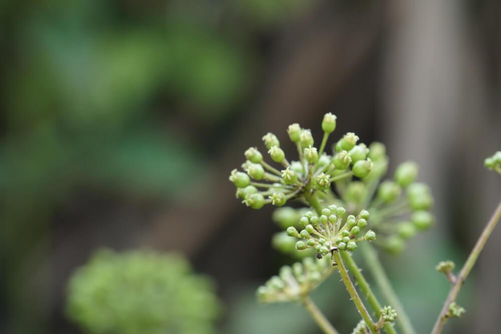 remedii din plante