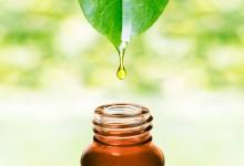 Studii științifice privind activitatea antimicrobiană a uleiurilor esențiale