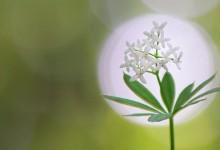 BIOMICIN FORTE – ANTIBIOTIC NATURAL