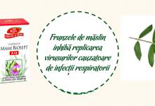 Plantusin sirop clasic, Plantusin forte cu miere şi propolis