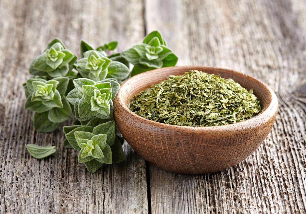 oregano planta benefica in tratamentul pentru imunitate