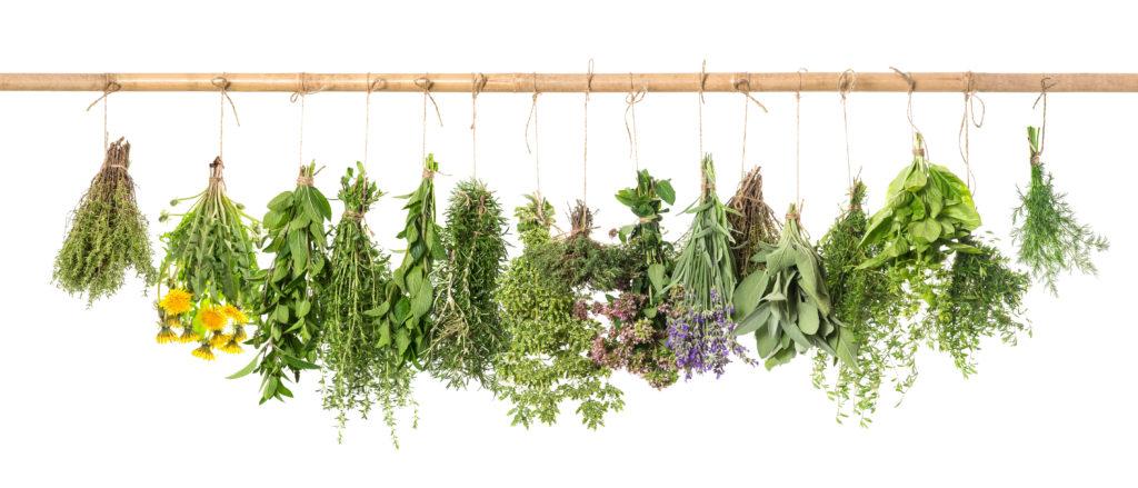 tratament plante medicinale