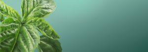 planta care imbunatateste digestia