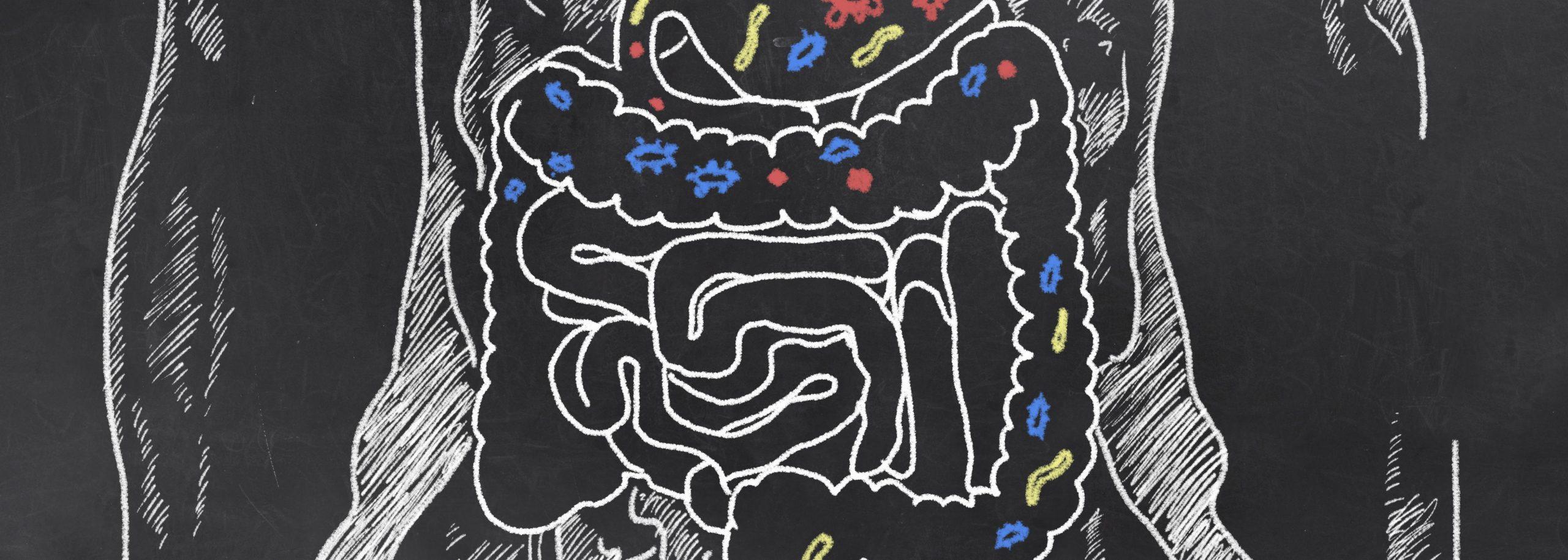 flora intestinala echilibrata