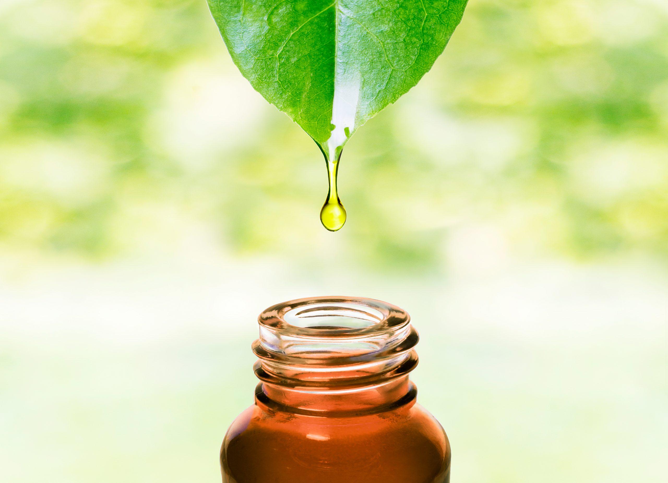 tratamente din plante medicinale