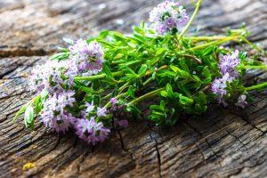 plante medicinale eficiente