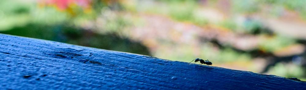 remedii impotriva furnicilor