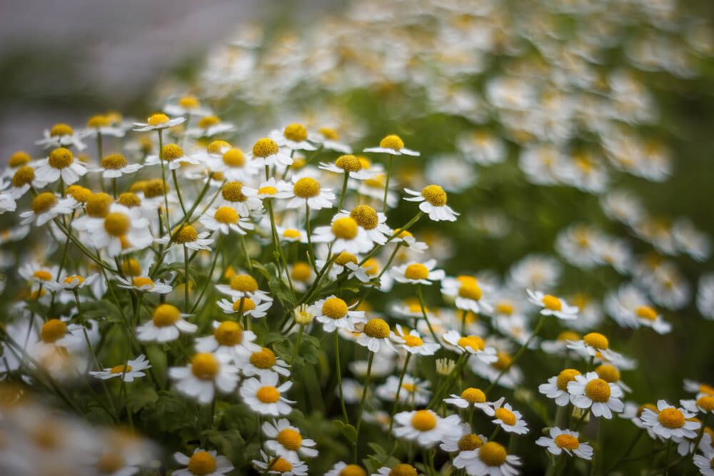 remedii cu plante